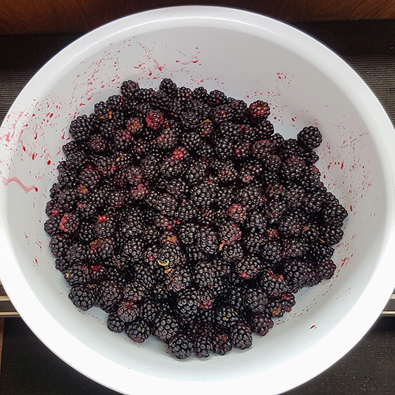 A bowlful of blackberries